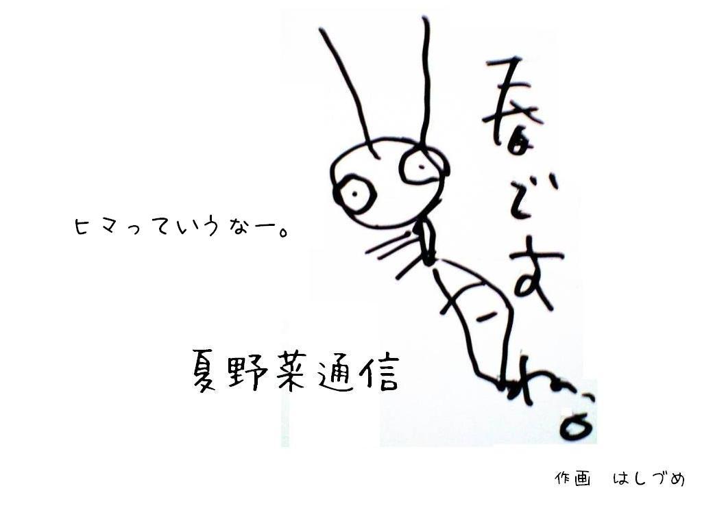 夏野菜通信5