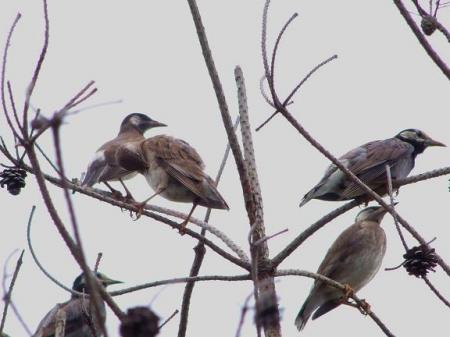 野鳥 No2
