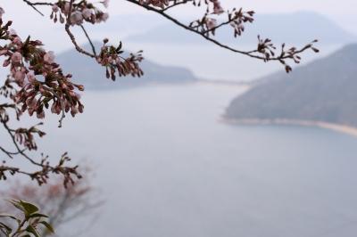 桜と瀬戸内海2