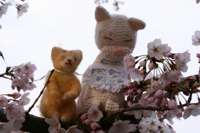 桜の木の上~