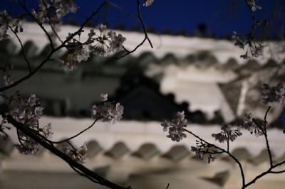 お城と桜 2