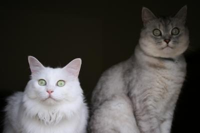 Mint&Jill 前よし!