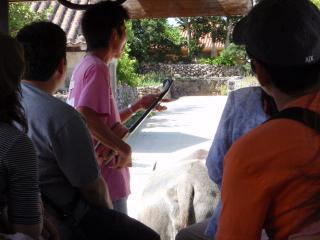20080720_水牛使いの三味線