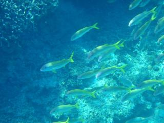 20080723_魚群(1)