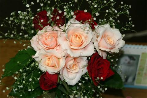 ダーリンと赤いバラ