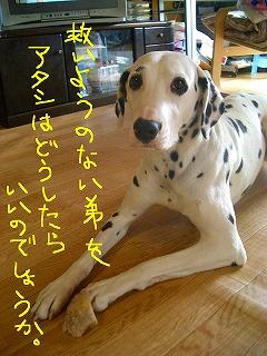 CIMG7460-2.jpg