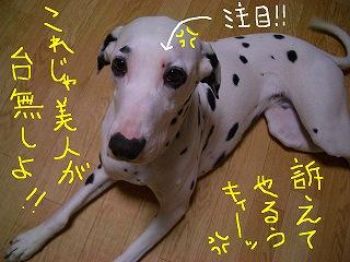 CIMG7468-2.jpg