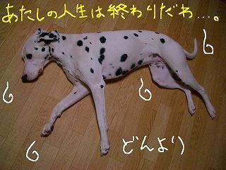 CIMG7469-2.jpg