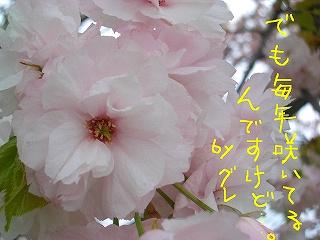 CIMG7712.jpg