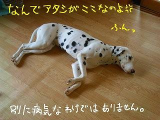 CIMG7868-2.jpg