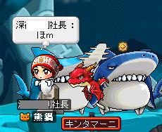 サメにハァハァ