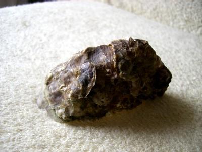 牡蠣の深い部分