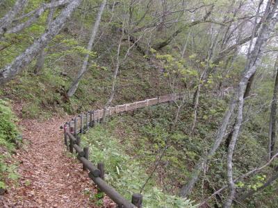 野鳥の森・散策道