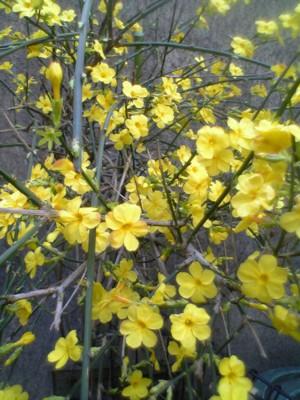 戸倉の玄関の花