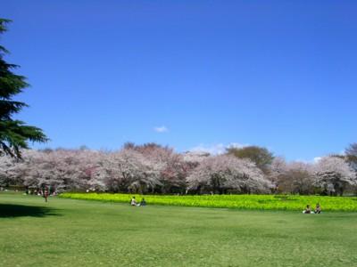08-4-1昭和記念公園