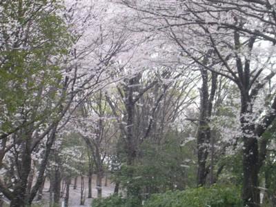 08-4-4小平中央公園4