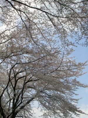 08-4-4小平中央公園5