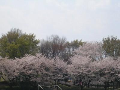 08-4-4小平中央公園6