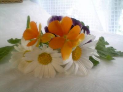 08?ェランダの花