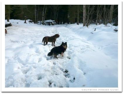 森の中は雪解け中