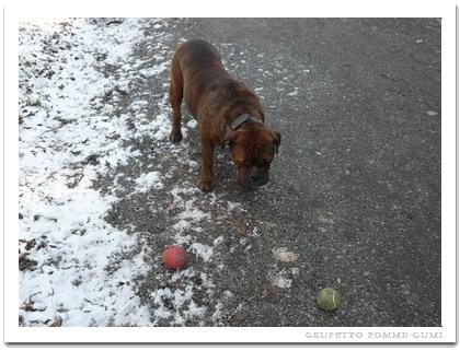 赤いボール発見
