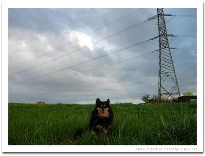 大きな虹を見たよ♪
