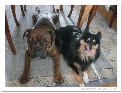犬の免許証・・・