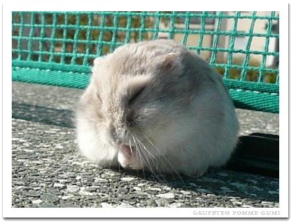 ピンポン台で居眠り
