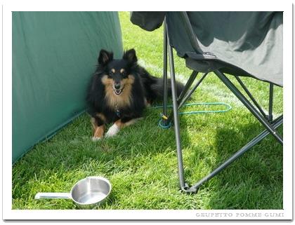 テントの影を借りました