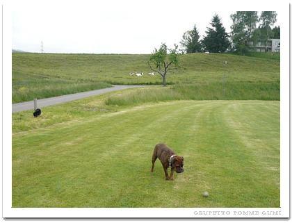 遠くで牛が見学中