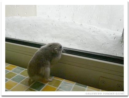 窓際に雪が積もってます