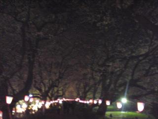 桜のトンネルや~