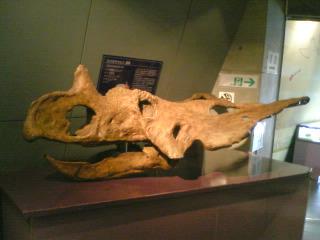 アタマ化石