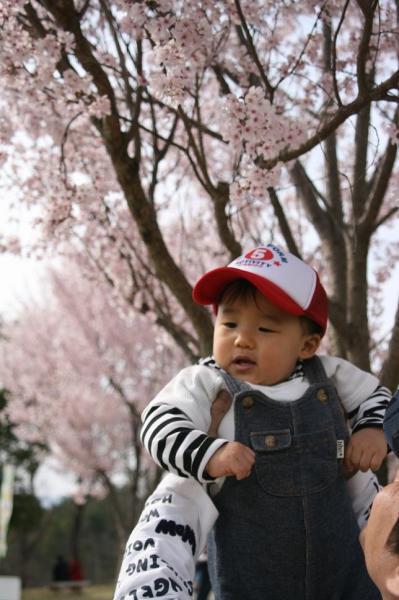 しゅうとと桜 @まんのう公園