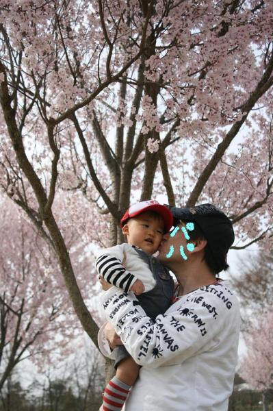 しゅうとと桜と。。。 @まんのう公園