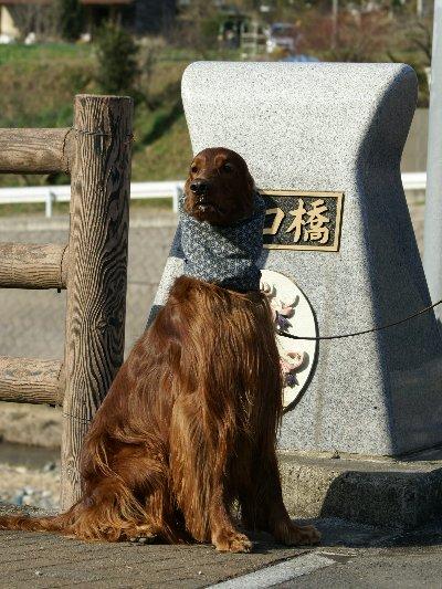 20080322hoshino11
