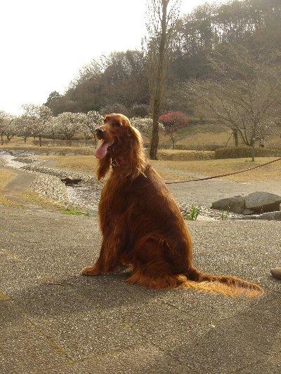 20080323karasawa2