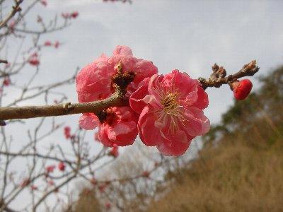 20080323karasawa4