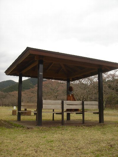 20080409hanami7