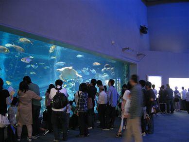 2008.0503鳥羽水族館_R
