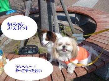 DSC05130-・祇convert_20080418232141
