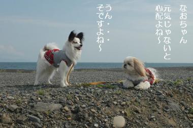 DSC_0032-・祇convert_20080424200520