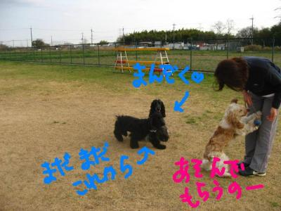 IMG_7861-p.jpg