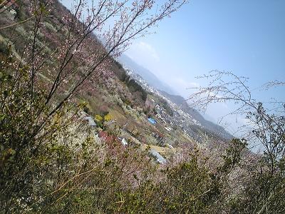 花見山の散歩道