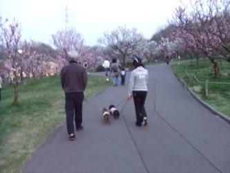 梅公園へGO!