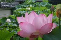 花ありて-1
