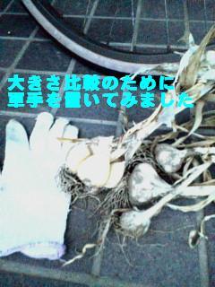 D1010083_20080628191623.jpg