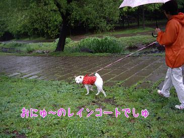 雨の中お散歩中