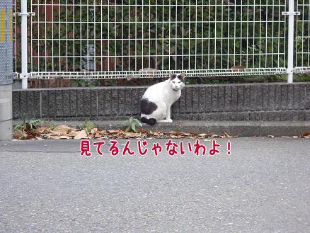 にらんでるネコちゃん
