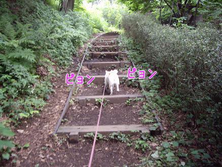 階段は得意なの~♪